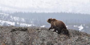Просто пощастило. Вчені знайшли вид тварин, який виграв від глобального потепління