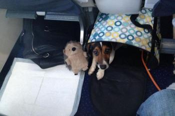 МАУ изменила требования к перевозке животных в салоне самолета
