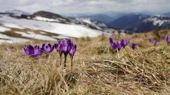 Когда украинцам ждать тепла: весенний прогноз от синоптиков