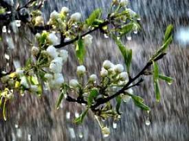 Украинцев ожидают дожди, грозы и заморозки