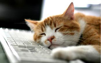 Как на пользу здоровью и делу спать на работе
