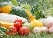 медики дают советы каким образом можно визуально определить насколько много нитратов в тех или иных овощах