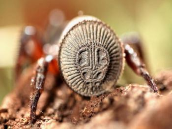 Китаєць знайшов павука, описаного ще за життя Конфуція